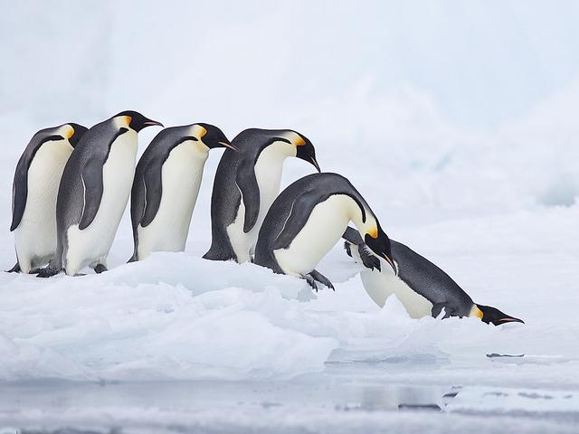 Cum sa calatoresti in Antarctica